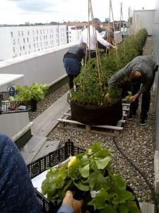 jardinageurbain